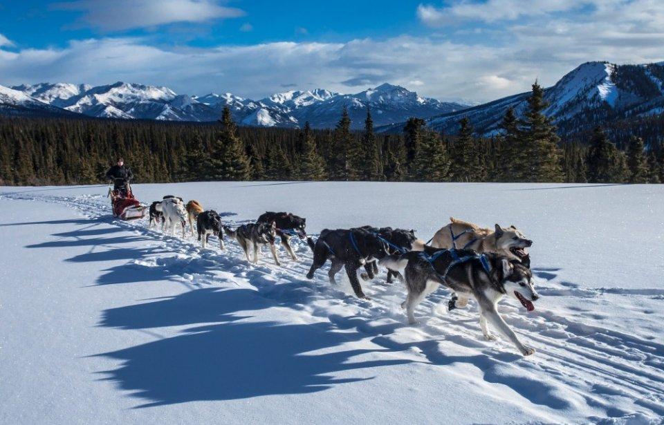 Koiravaljakko, Alaska