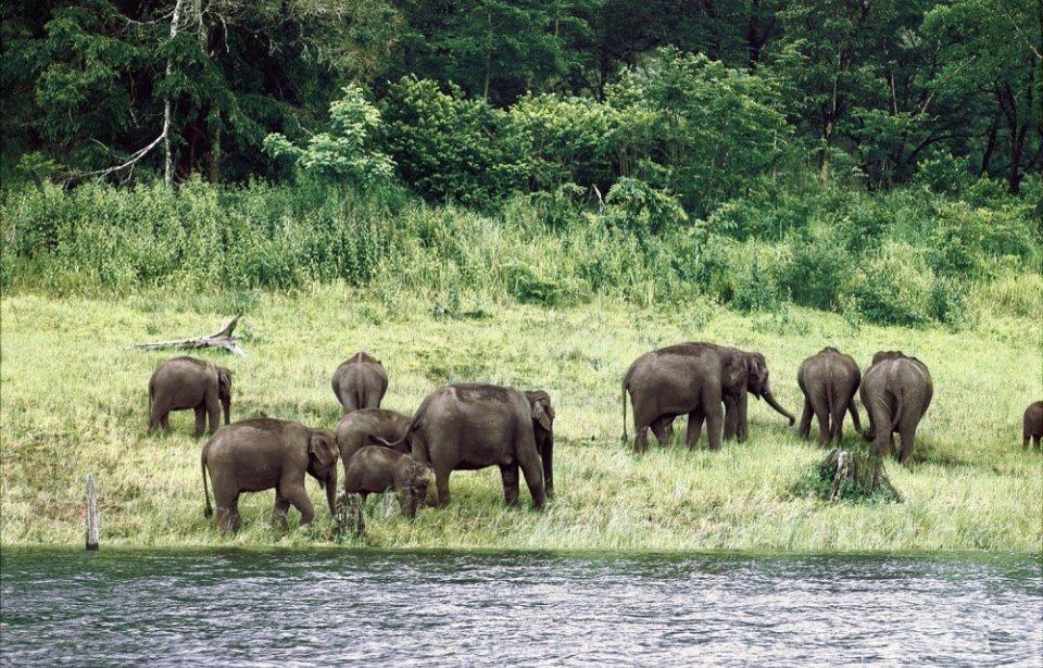 Kerala, Periyar
