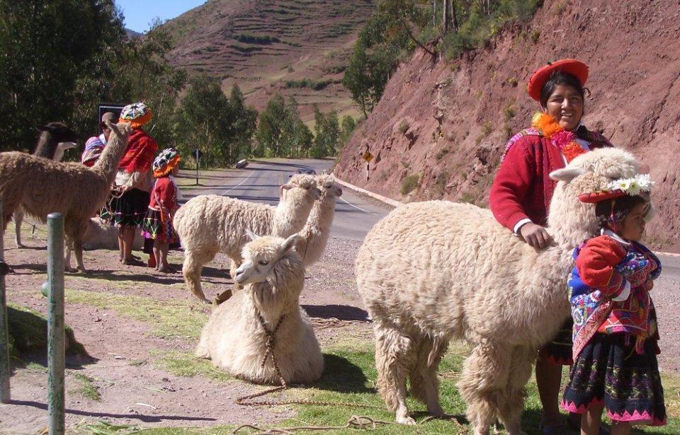 Alpakoita Pyhässä laaksossa Cuscossa