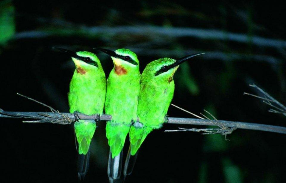 Botswanan lintuja