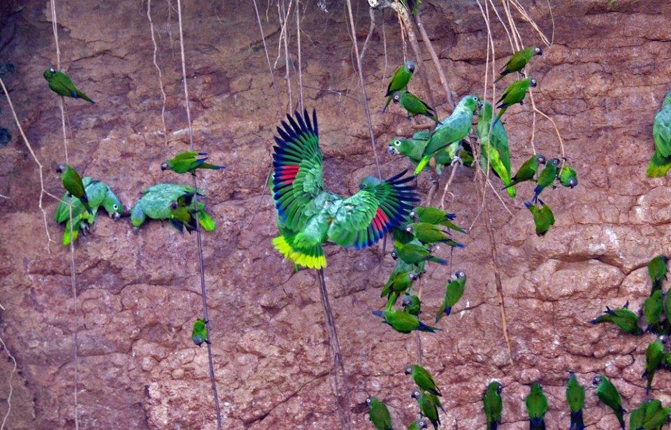 Napo Wildlife Centre Ecolodge, Ecuador