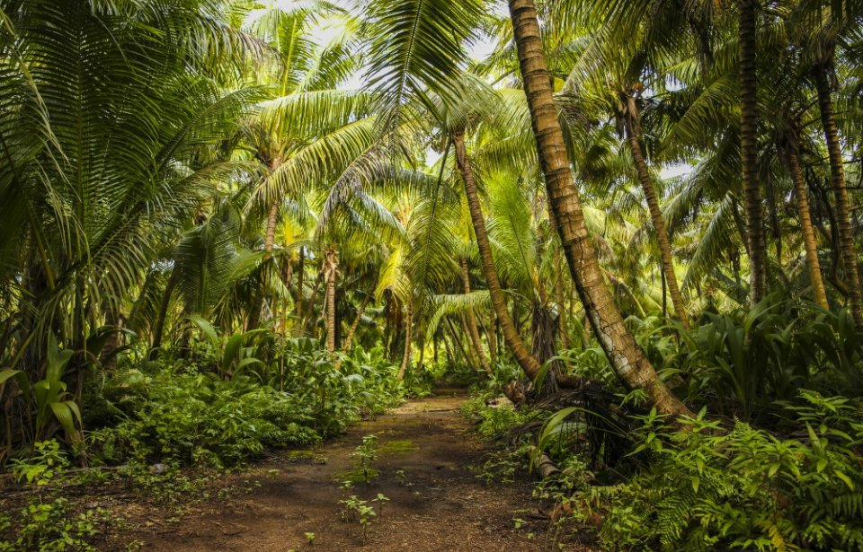 Seychellit, Denis island