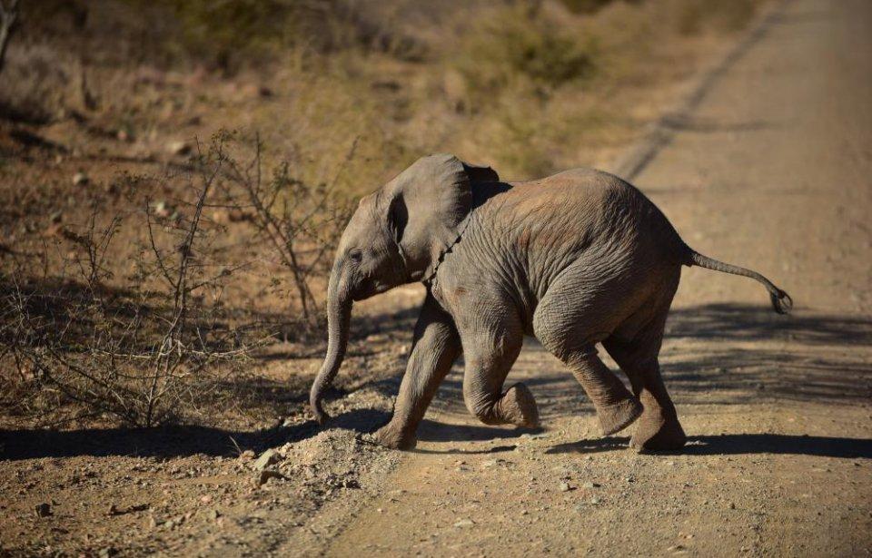 Etelä-afrikka, räätälöity, yksilöllinen, afrikka, norsu