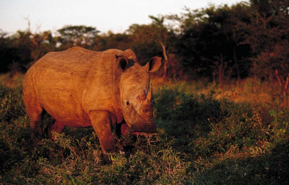 Etelä-afrikka, räätälöity, yksilöllinen, afrikka, safari, villieläimet