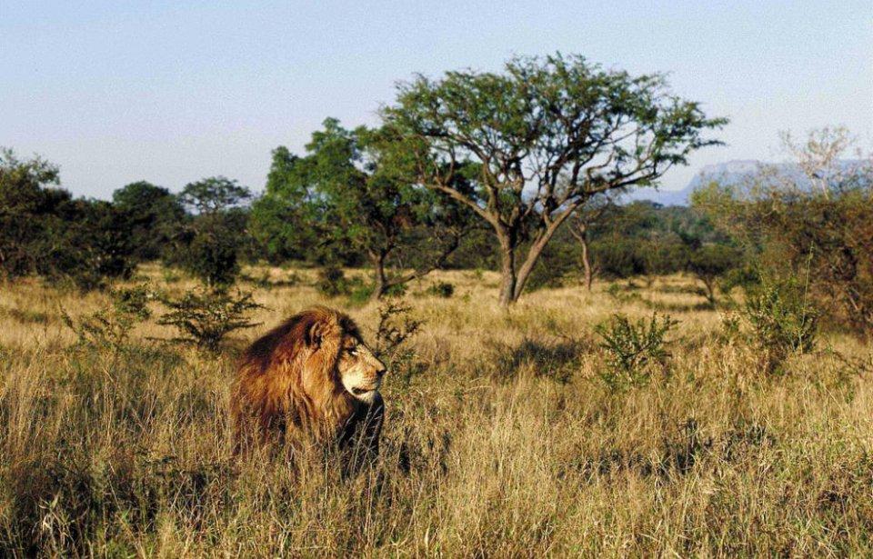 Etelä-afrikka, räätälöity, yksilöllinen, afrikka, safari