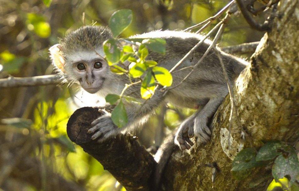 Etelä-afrikka, räätälöity, yksilöllinen, afrikka, luonto, eläimet
