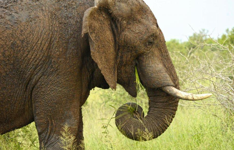 Etelä-afrikka, räätälöity, yksilöllinen, afrikka, norsu, safari