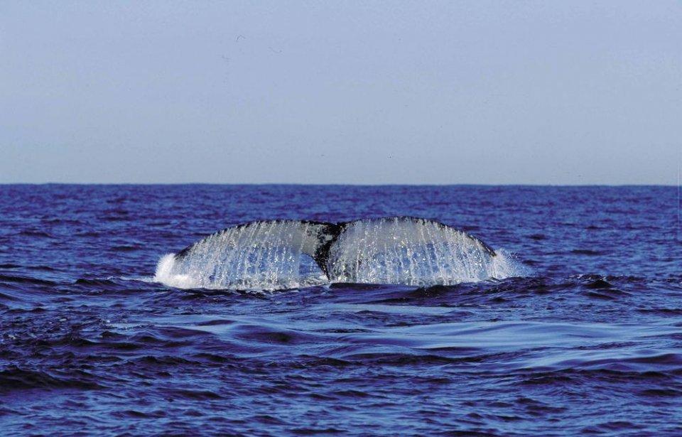 Etelä-afrikka, räätälöity, yksilöllinen, afrikka, meri, valas
