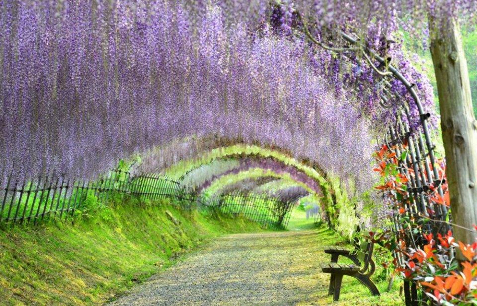 japani, Japanilainen puutarha, japani stopover