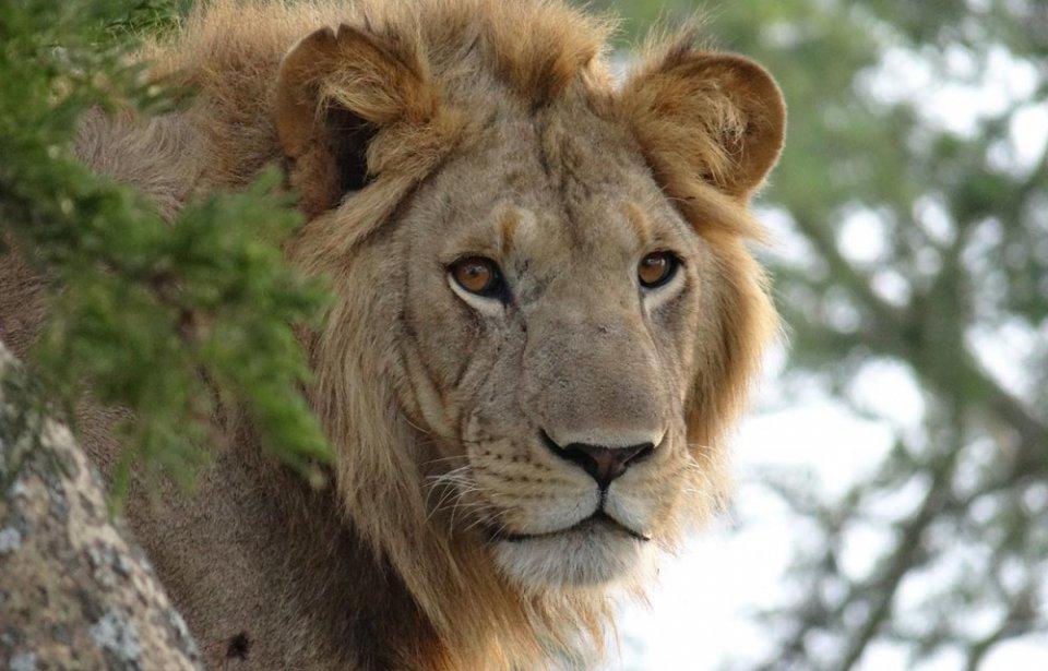 Safari Uganda