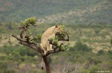 Akagera kansallispuisto