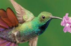 Costa Rica, lintujen bongaus, San José