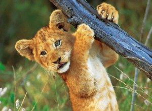 pentu Krugerin kansallispuistossa