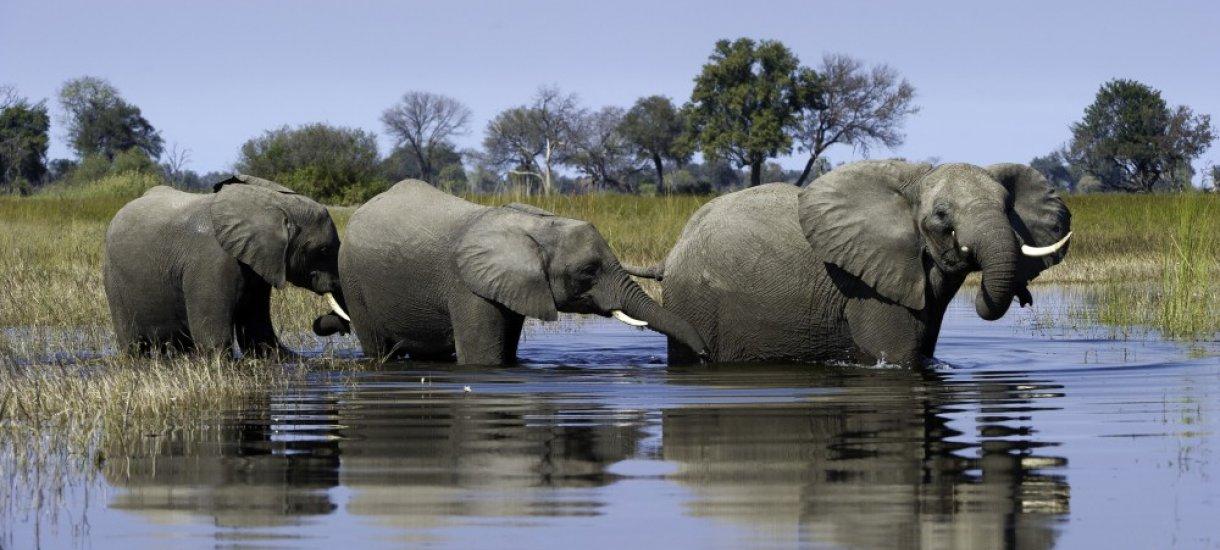 Botswana, elefantteja safarilla