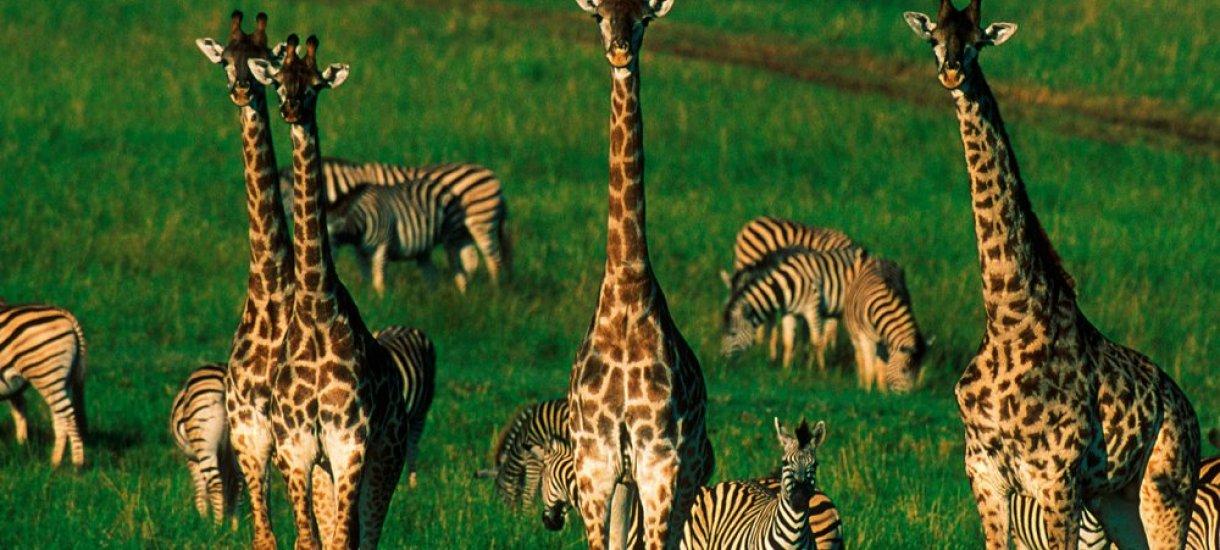 Etelä-Afrikan eläimiä