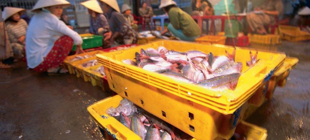 Kalatorilla Vietnam, Kambodza