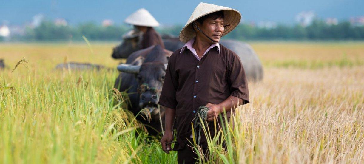 Riisinviljelijöitä, Vietnam, Aasia