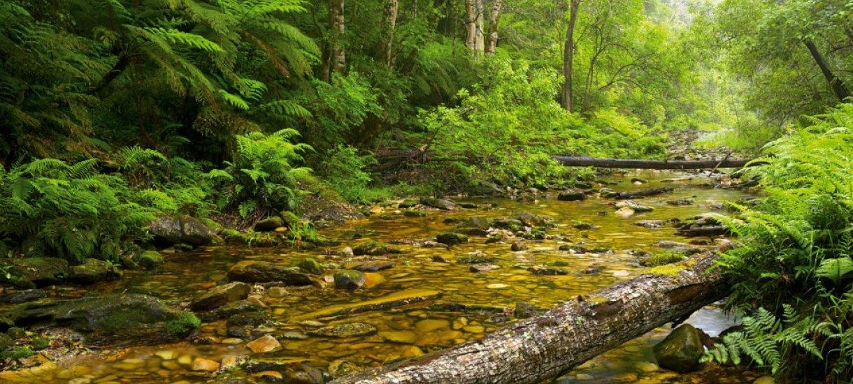 Tsitsikamma metsä, Tsitsikamma kansallispuisto
