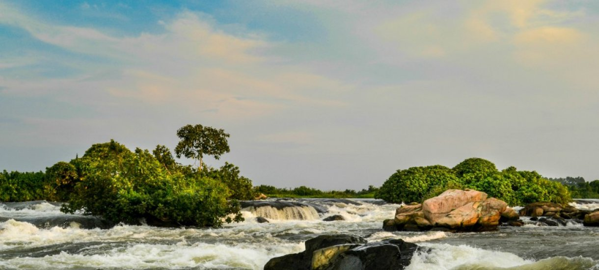 Uganda, gorillasafari,  vuorigorilla