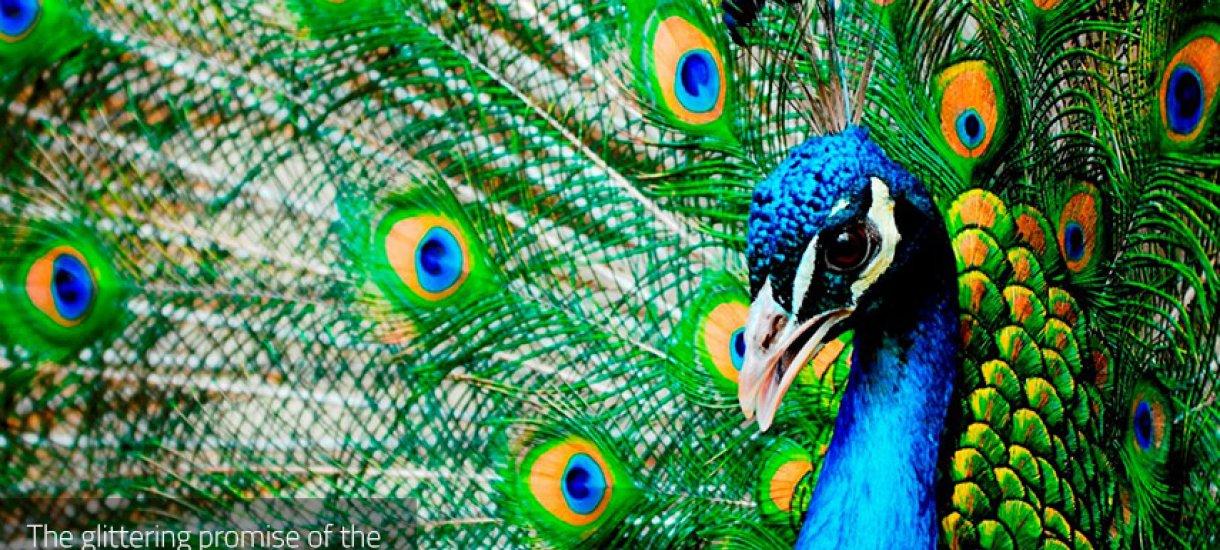 Sri Lankan eläimiä