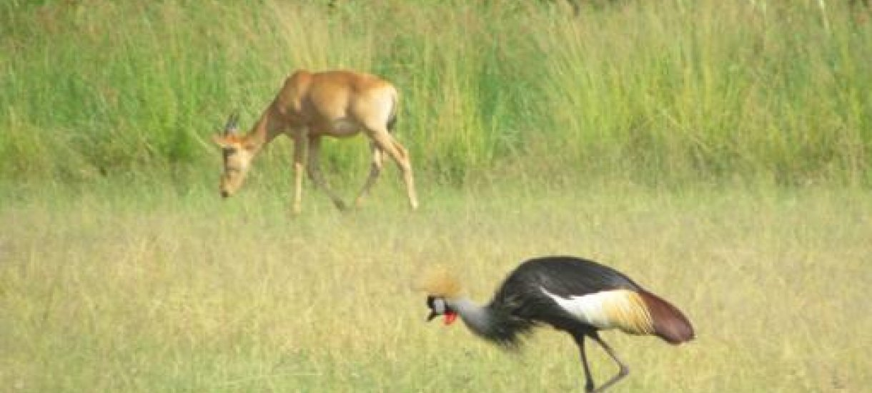 Murchison National Park, Uganda
